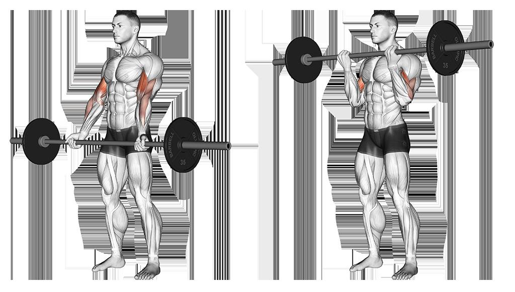 crul-biceps
